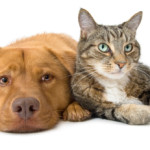 pet urine treatment