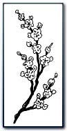 Blossom - Youth, Spring, Newly Wed