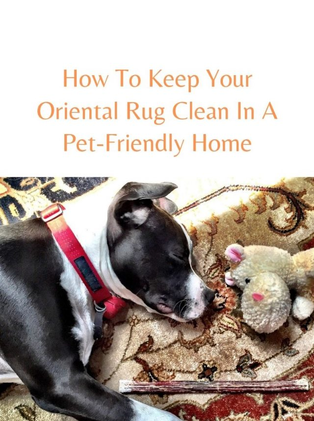 Pet Urine and Oriental Rugs - A Bad